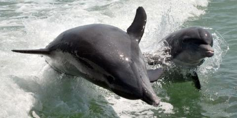 Dolphins - Image credit: Naples, Marco Island and Everglades CVB