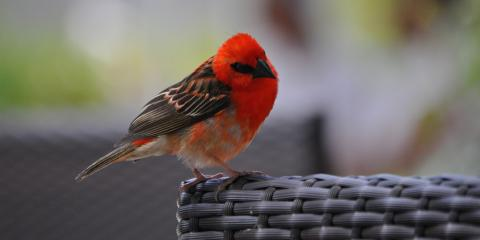 red bird perched on chair
