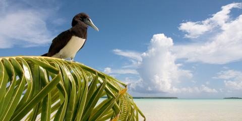 bird on palm in Tahii