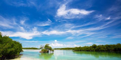 Florida Mangroves Key West