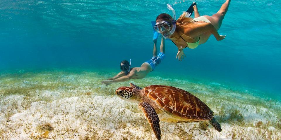 11 best snorkeling spots in the caribbean the moorings