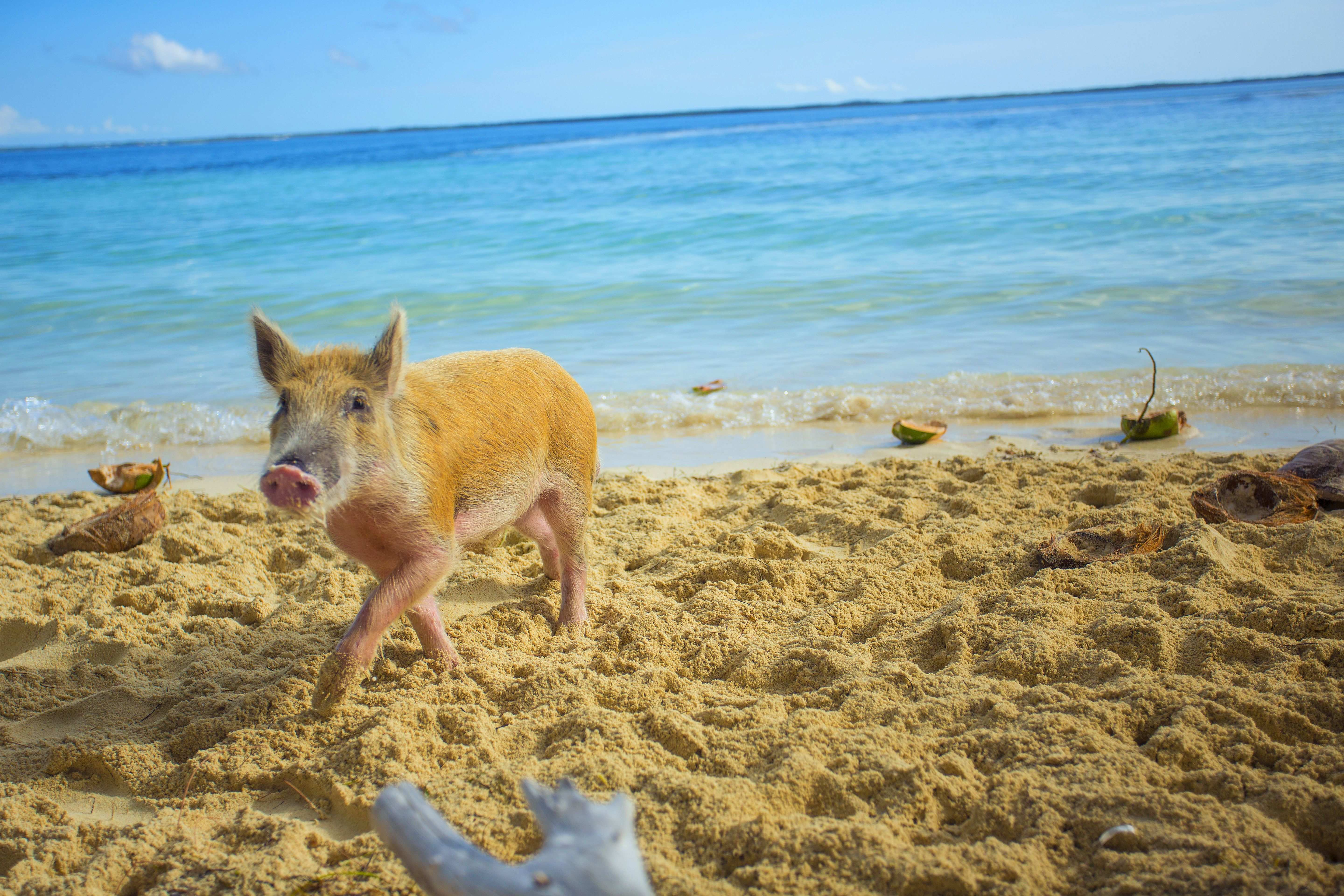 The 6 Best Things to Do in Abaco Islands, Bahamas | The Moorings