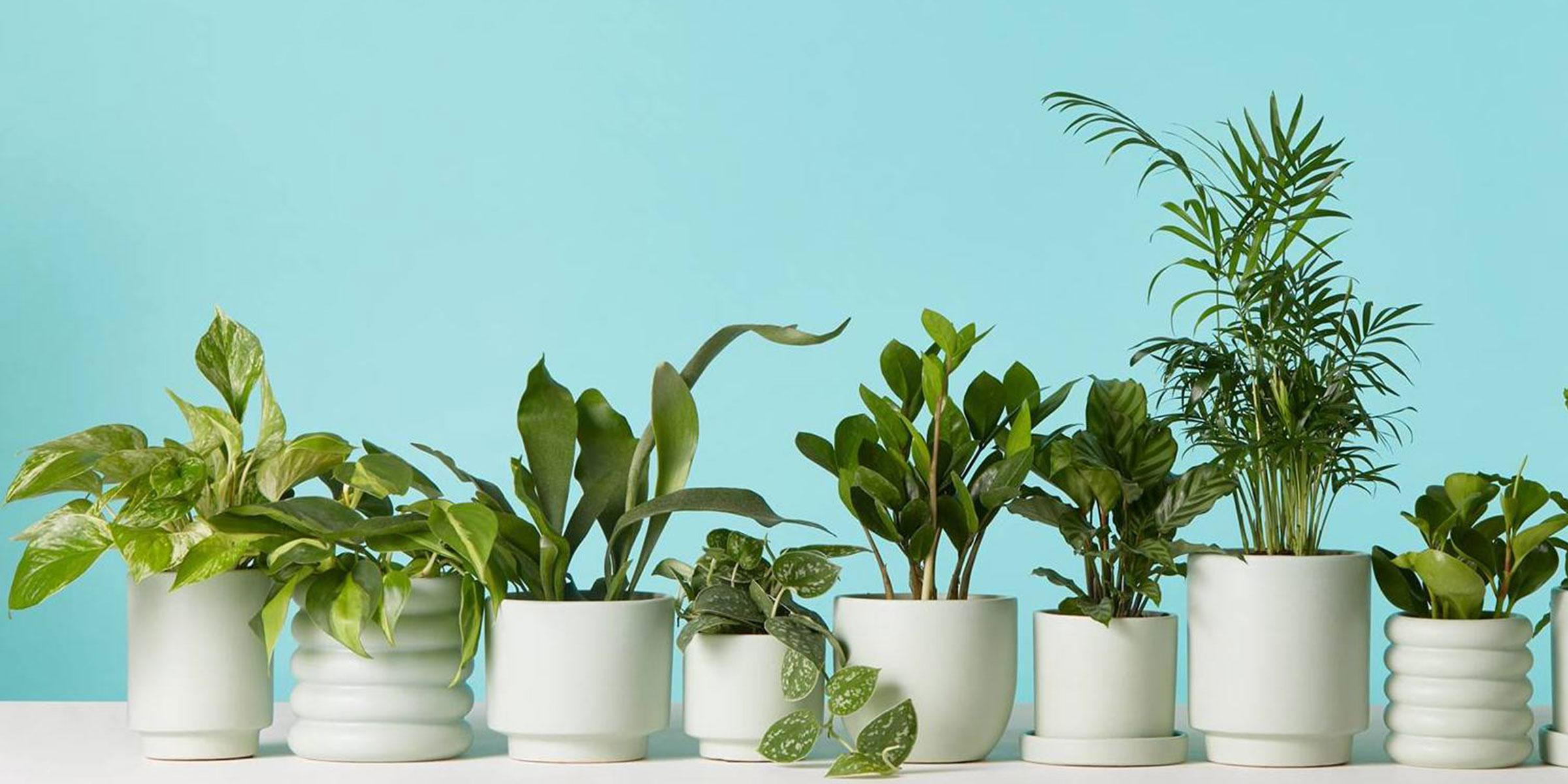 Go Green with indoor plants