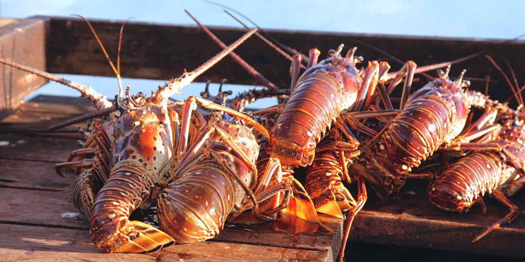 lobster.jpg?t=1IroJ&itok=RIltn4DV