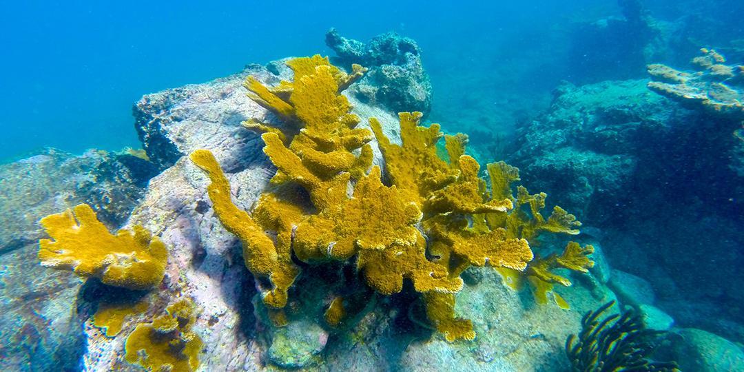 US Virgin Islands Snorkeling