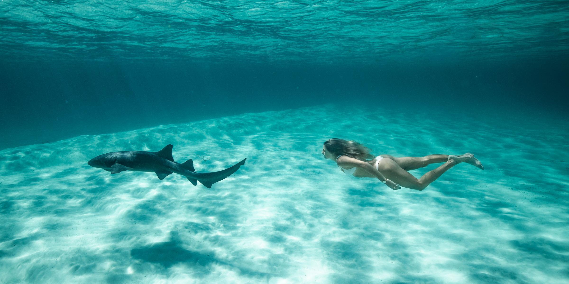 Swimming with nurse sharks in the Exumas, Bahamas